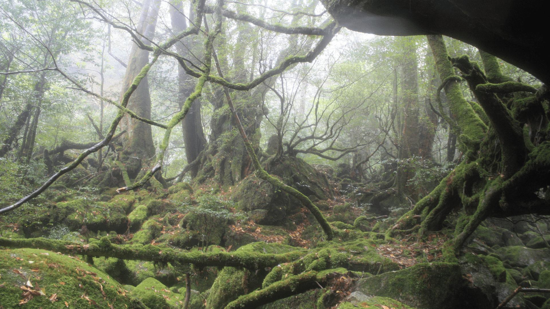 屋久島の森林